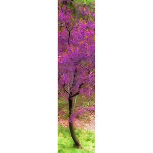 A vibrant redbud tree flourishes in the woods, its branches full with fuchsia blossoms and tipped with clusters of small green leaves.   Redbud Spring by Alison Thomas of Serenity Scenes Photography and Digital Art.