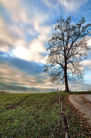 An almost bare tree on a country road with a backdrop of mountains and a mixture of clouds and fog.  Roadside Tree by Alison Thomas of Serenity Scenes Photography and Digital Art.