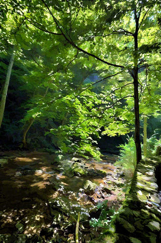 A stone wall borders a rocky stream with sunlight filtering through a young sapling growing on the edge of the flowing water.  Rock Wall Stream by Alison Thomas of Serenity Scenes Photography and Digital Art.