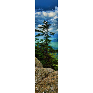 An evergreen tree on the mountain side stands tall, framed by the lichen-covered rocks before it, the valley below it, the mountains beyond, and bright white clouds above.  Sky Tree by Alison Thomas of Serenity Scenes Photography and Digital Art
