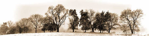 A line of trees on one of those snowy day where the world turns black and white. A thin inch or two of snow covers the ground, and it's still falling, flakes spinning in the air. The trees' dark trunks and leaves stand out against a dull white backdrop of falling snow that obscures everything in the distance.   Snowy Tree Line by Alison Thomas of Serenity Scenes Photography and Digital Art.