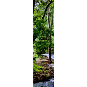 A babbling brook meanders through a grove of tall trees, their branches full of the rich, dark green leaves of summer.   Summer Stream by Alison Thomas of Serenity Scenes Photography and Digital Art