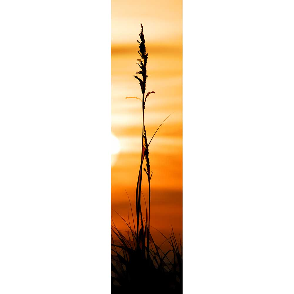 A single sea oat looms as if giant, a black silhouette against the orange and yellow stripes of sunrise. A slice of the white-hot sun peeks in on one side, its light catching on one cluster of seeds. Sunlight on Grass by by Alison Thomas of Serenity Scenes Photography and Digital Art