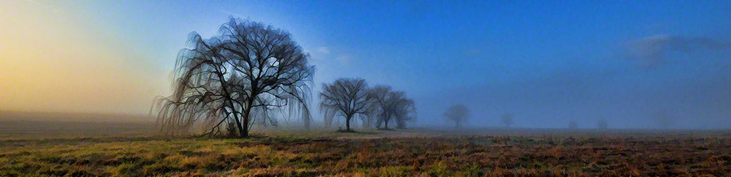 A line of bare willow trees appear in a field at sunrise. The sun tinges the eastern sky pink and yellow, but shadowy blues and grays swallow up the trees in the distance.   Sunrise Tree Line by Alison Thomas of Serenity Scenes Photography and Digital Art
