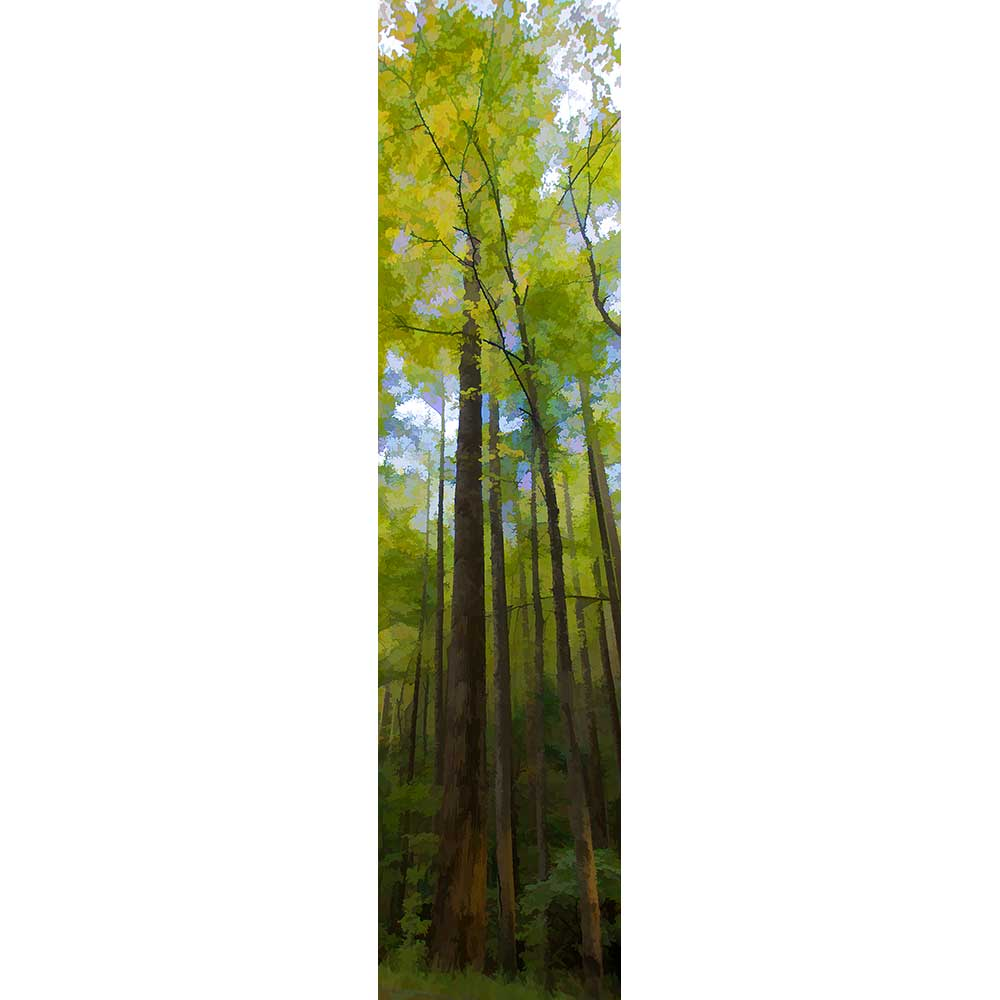 Thin trees reach up, tall and straight, blocking out most of the bright blue sky. The leaves sprouting on their high branches are the soft yellow-green of early spring.  Tall Green by Alison Thomas of Serenity Scenes Photography and Digital Art.