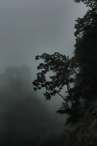 A slender tree clings to the side of a mountain in dim gray light. The mountainside is shrouded in fog, concealing the background and wrapping the tree in a soft haze.   Tenacity by Alison Thomas of Serenity Scenes Photography and Digital Art