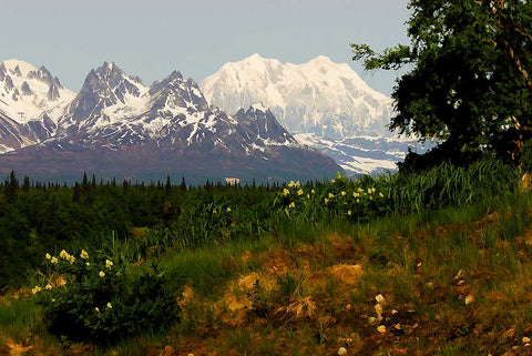 The grand Denali covered with snow under a clear blue sky while summer flowers dot the landscape.  The Hills are Alive by Alison Thomas of Serenity Scenes Photography and Digital Art