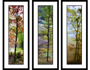 Thin Trees grouping by Alison Thomas of Serenity Scenes Photography and Digital Art.