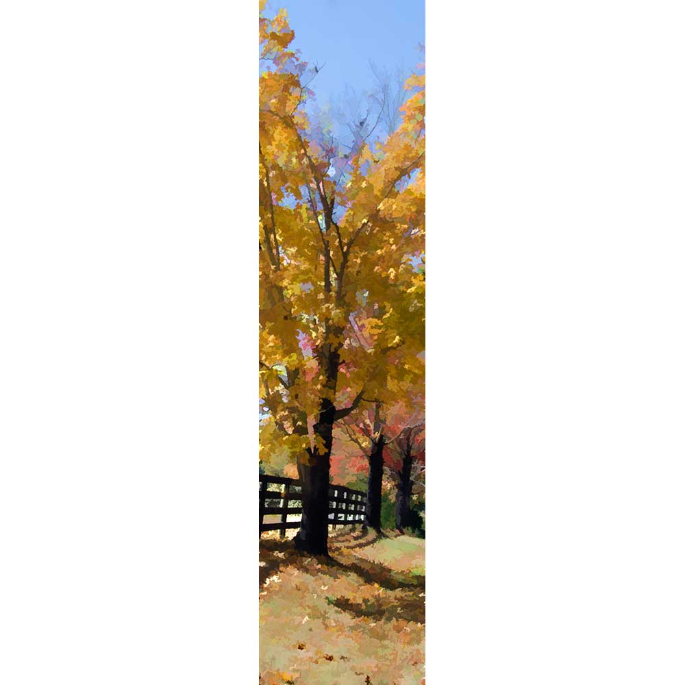 Three trees in full autumn glory line up next to a country fence. Their bright yellow leaves stand out against the blue sky, and beyond them, other trees are dressed in red, green, and orange.  Three Trees by Alison Thomas of Serenity Scenes Photography and Digital Art.