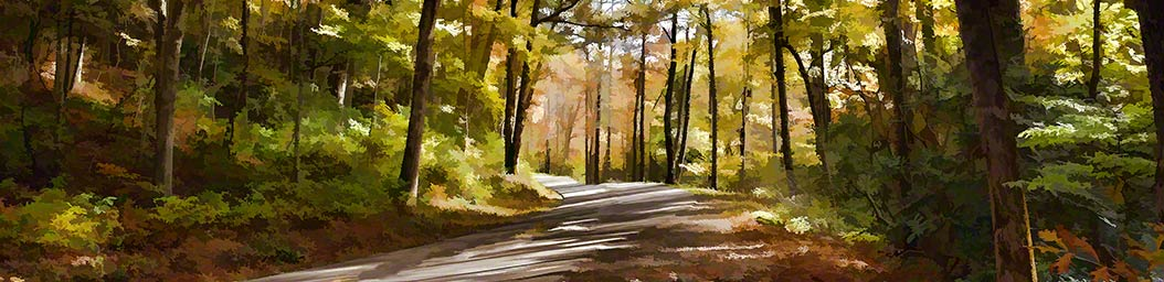 Sunlight filters through thin, autumn trees, their shadows making a pattern on the forest trail.  The path disappears around a curve, where the greens, browns, and oranges of the forest fade into soft pastels.  Through the Woods by Alison Thomas of Serenity Scenes Photography and Digital Art.