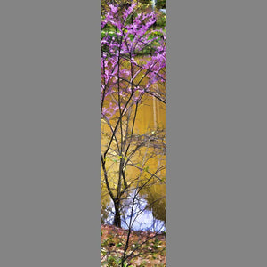 A young redbud blossoms at the side of a pond. The water reflects soft brown shadows, with a  piece of blue sky peeking out at its edge.  Waterside Purple by Alison Thomas of Serenity Scenes Photography and Digital Art.