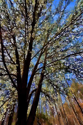 A Bradford pear tree lovingly tended into a splash of white every spring reaches into the blue sky.  White Spring by Alison Thomas of Serenity Scenes Photography and Digital Art