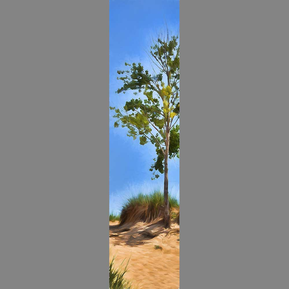 A seaside dune crossed with the footprints of people walking to and returning from the water. A small tree stands among the dry grasses that grow on the sand, green leaves against a hot blue sky.  Windswept Dune by Alison Thomas of Serenity Scenes Photography and Digital Art