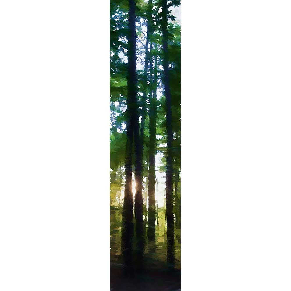 The setting sun shines through tall summer trees, a bright flare caught between two silhouettes. Taken in my own back yard while sitting around the fire pit waiting for dark.   Woods at Sunset by Alison Thomas of Serenity Scenes Photography and Digital Art