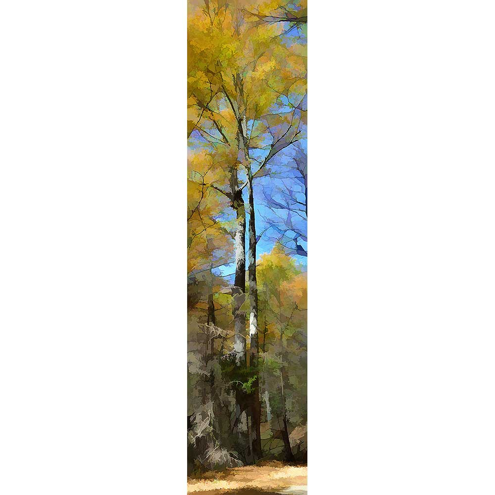 A splash of soft yellow leaves rises above the rest of the forest in the background. Autumn light filters through the leaves above, decorating the tree trunks with light and shadow.  Yellow Splash by Alison Thomas of Serenity Scenes Photography and Digital Art