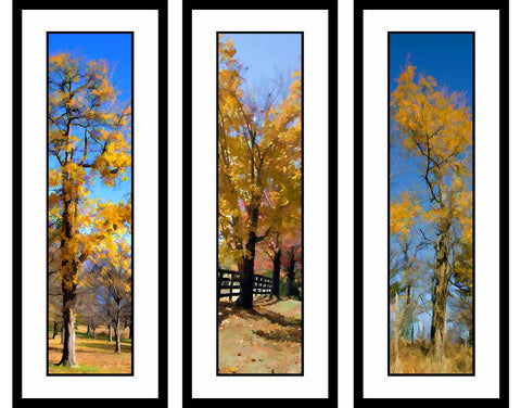 Fall Yellows 3 grouping by Alison Thomas of Serenity Scenes Photography and Digital Art.