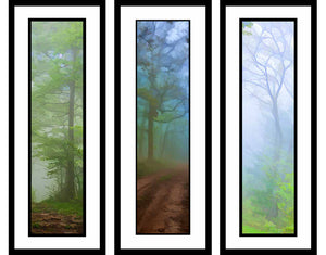 Foggy Scenes grouping by Alison Thomas of Serenity Scenes Photography and Digital Art.