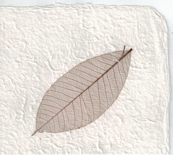 Handmade Paper - Brown Rubber Tree