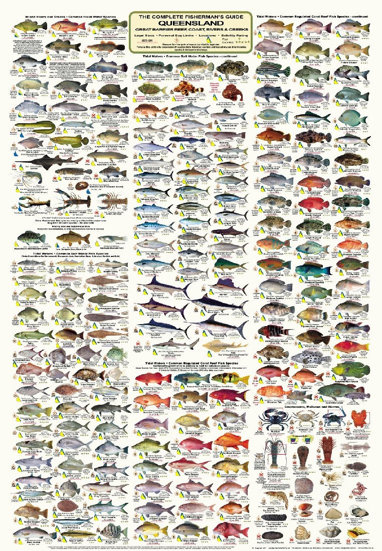 RECREATIONAL FISHERMAN'S GUIDE QUEENSLAND - WALL POSTER