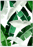 Premium Banana Leaves Artwork
