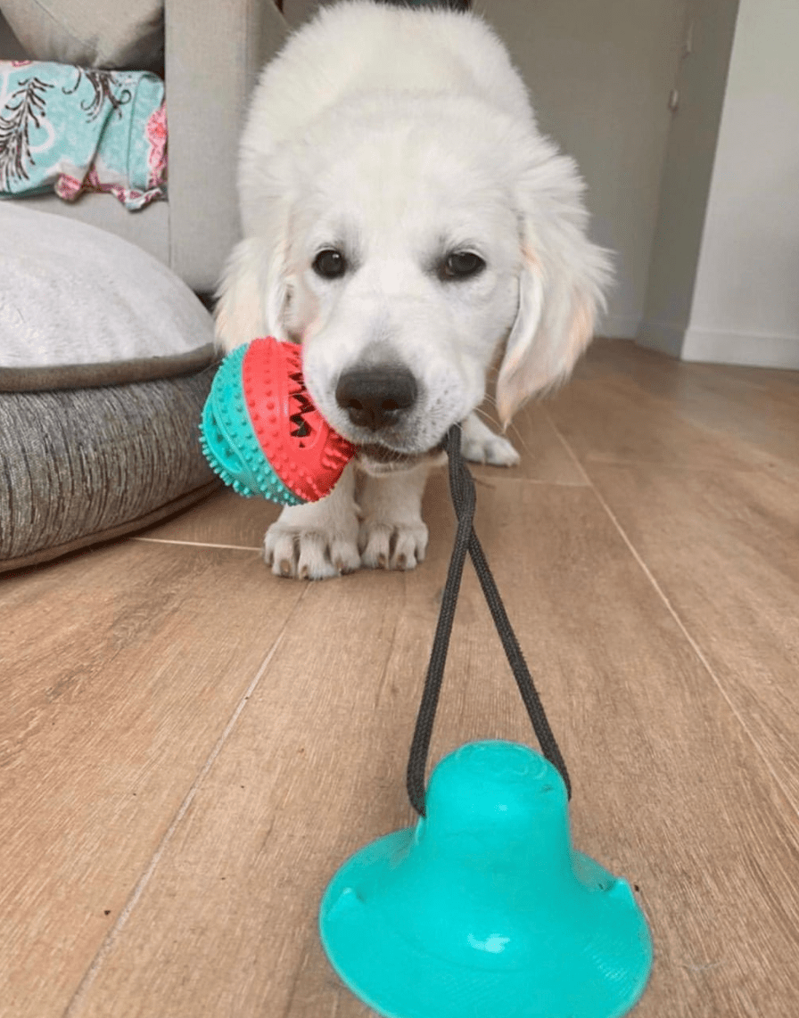 TUG TOY™ - Suction Cup Dog Toy – Pup First