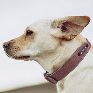 Custom Engraved Premium Leather Dog Collar