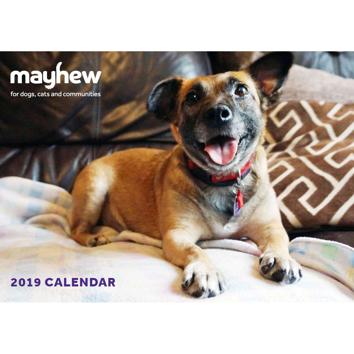 Mayhew 2019 Dog Calendar Mayhew Shop