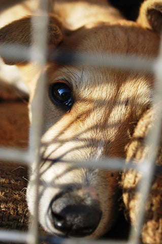 Mayhew International Virtual Gift: Help a Street Dog - The Mayhew Animal Home