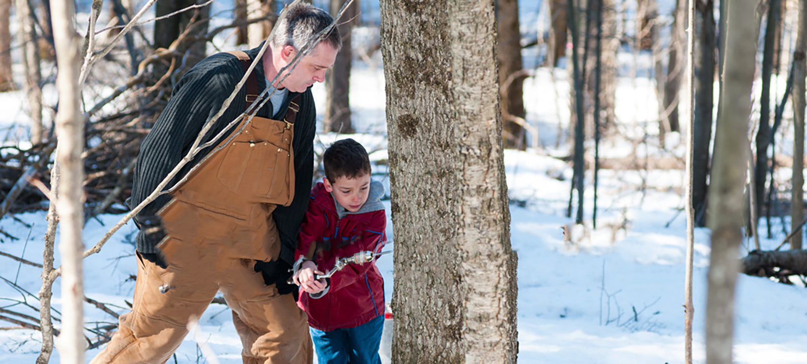 Maple Syrup: What Makes the grade