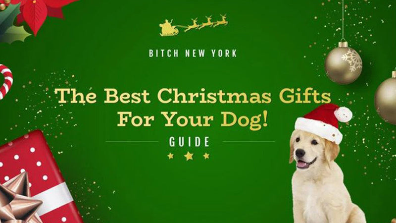 Top 15 Christmas Gifts For Your Dog