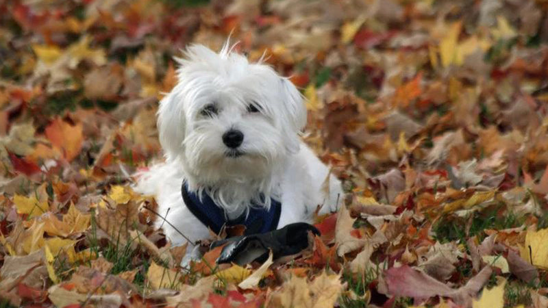 Colder Weather Tips for your Pet