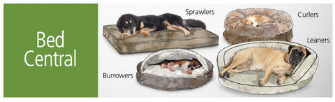 Dogs sleeping positions: sprawlers, curlers, leaners, burrowers
