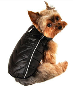 Chihuahua winter dog coat