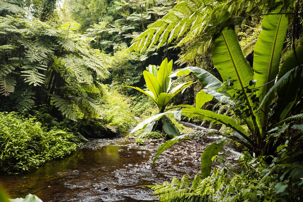 Water flowing down river in a green jungle in Kenya