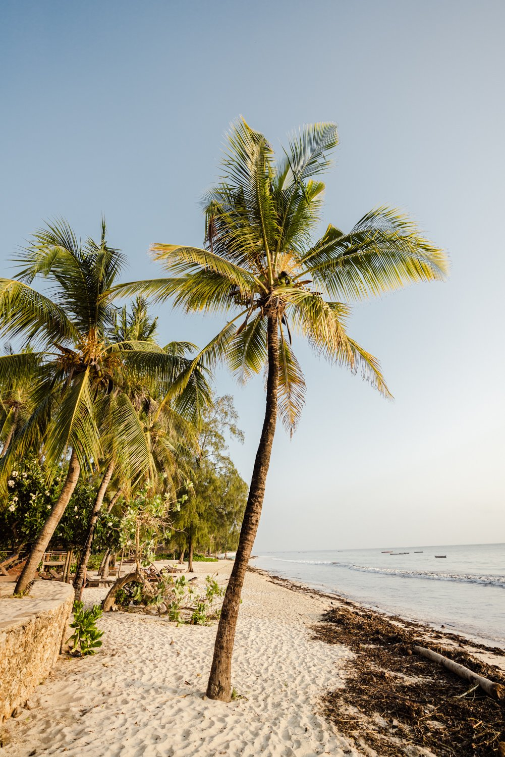 Palm trees on malindi beach in kenya