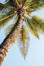 One palm tree on malindi beach in kenya