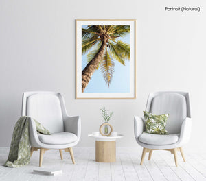 One palm tree on malindi beach in kenya in a natural fine art frame