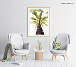 Green palm tree against white sky in Malindi Beach Kenya in a natural fine art frame
