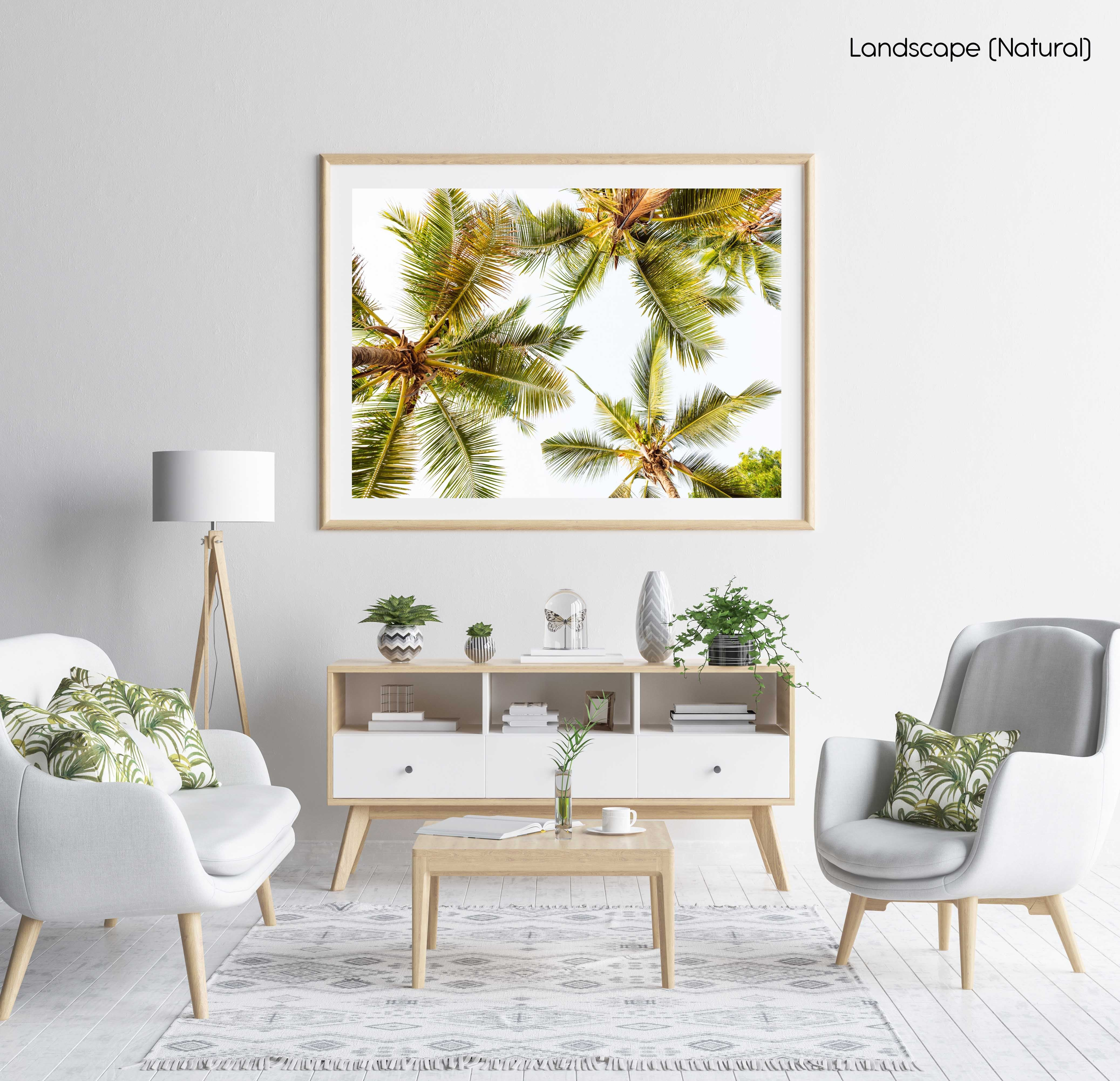 Green palm trees pattern and white sky in Kenya in a natural fine art frame