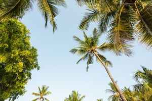 Green palm trees and blue sky in Kenya
