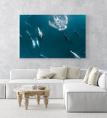 Aerial of pod of dolphins swimming in dark blue ocean in Cape Town in an acrylic/perspex frame