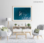Aerial of dolphins swimming in dark blue sea in Cape Town in a natural fine art frame