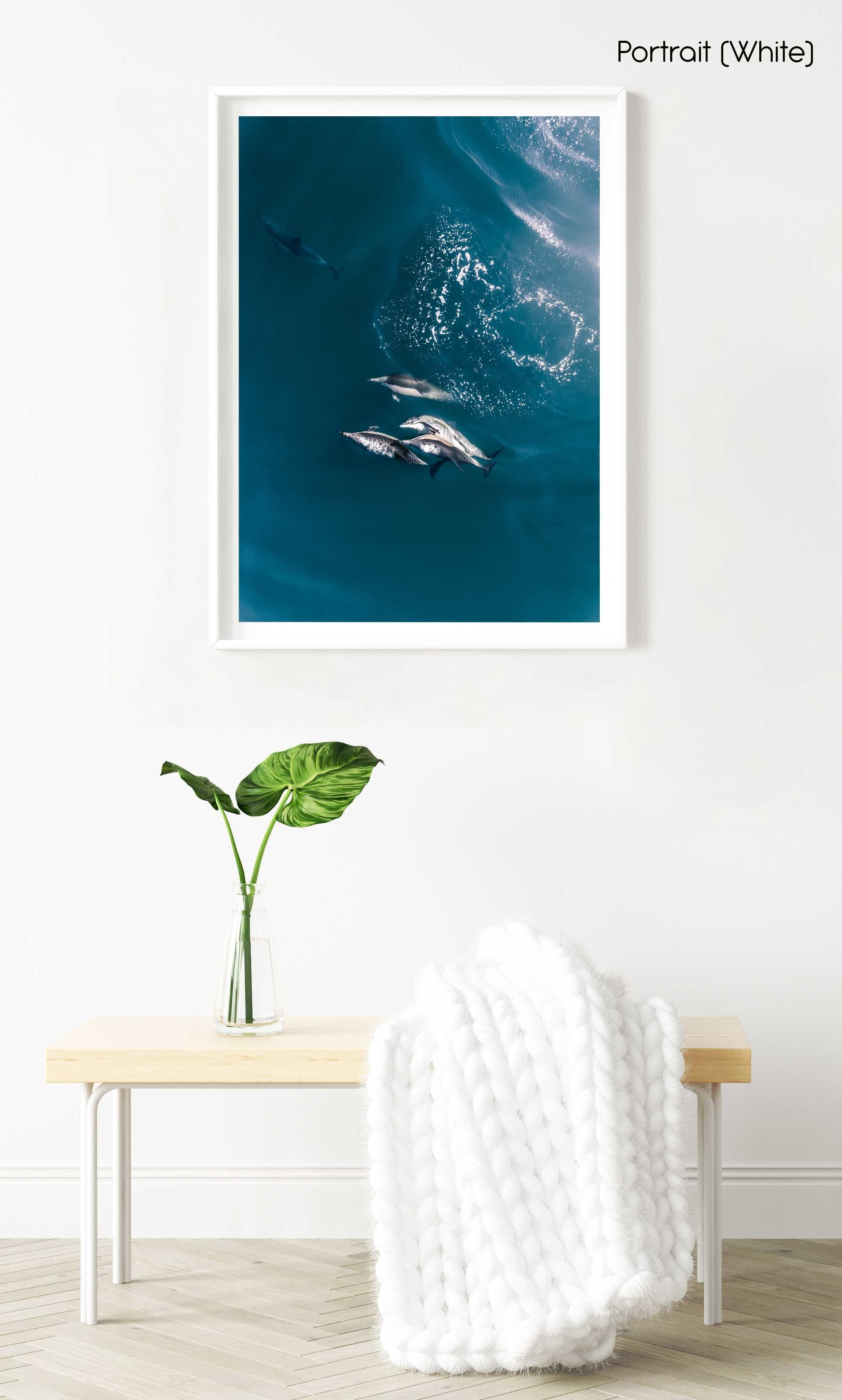 Aerial of dolphins swimming in dark blue sea in Cape Town in a white fine art frame