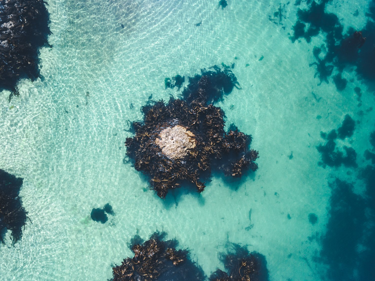 One rock with seaweed in middle of blue green water from above