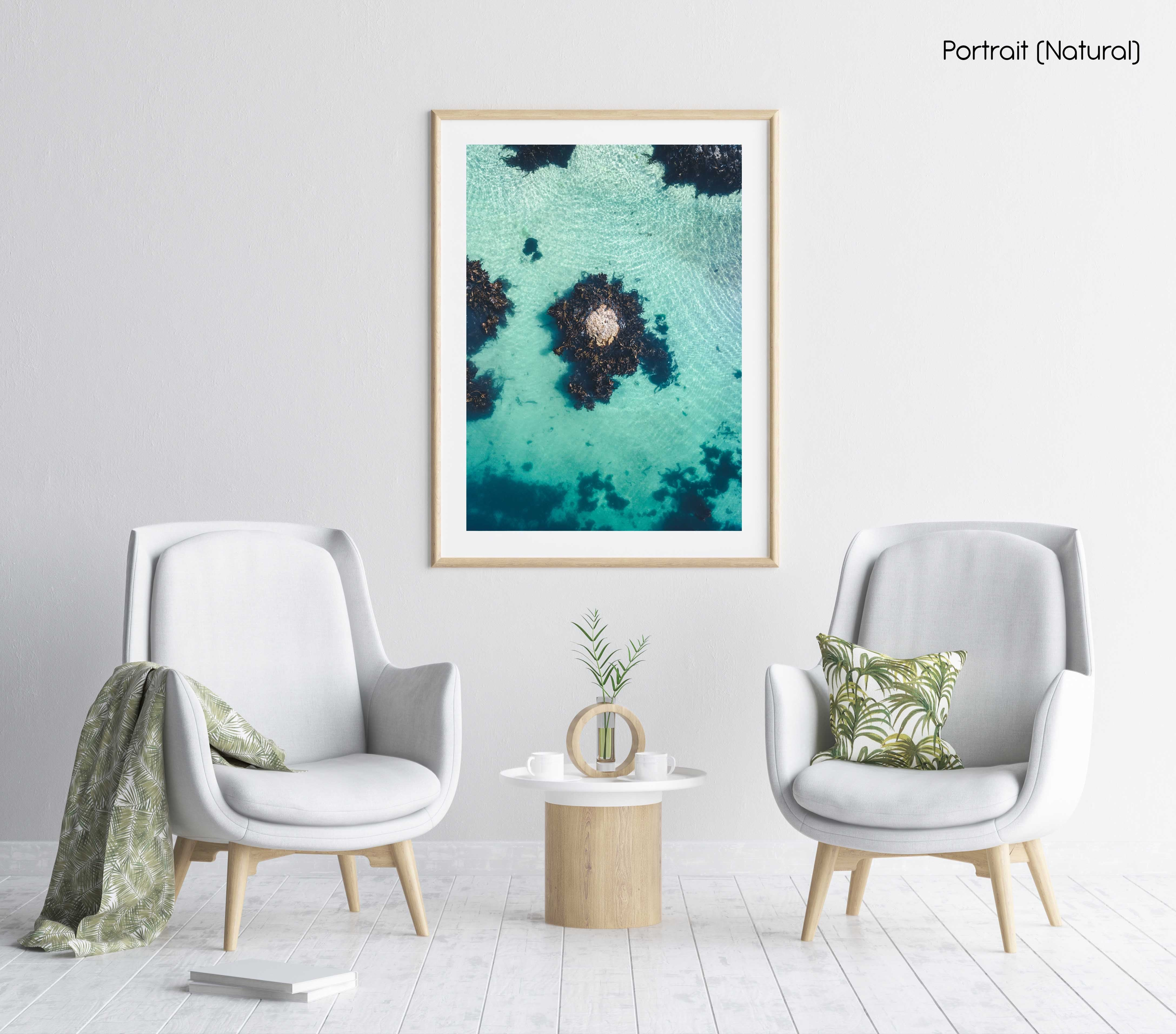 One rock with seaweed in middle of blue green water from above in a natural fine art frame