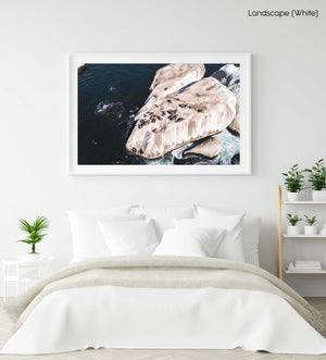 Aerial of seals lying on a big rock at Oudekraal Cape Town in a white fine art frame