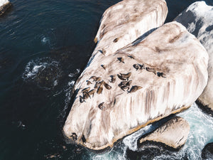 Aerial of seals lying on a big rock at Oudekraal Cape Town
