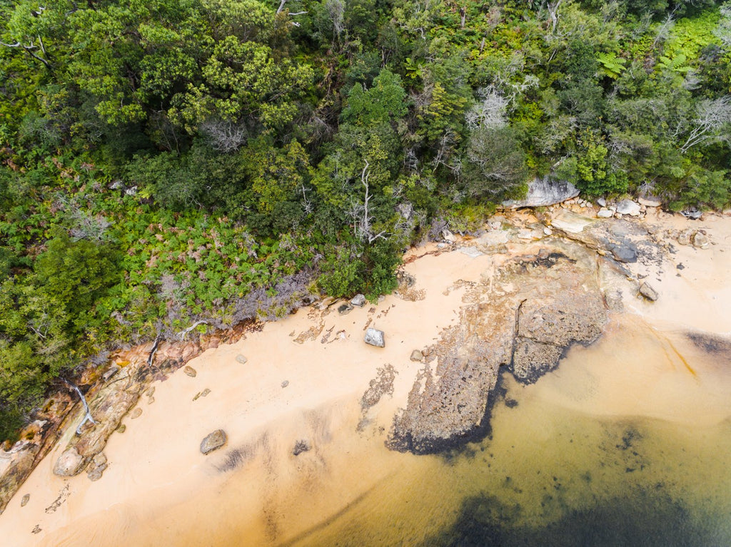 Green trees at a beach in Sydney from aerial point