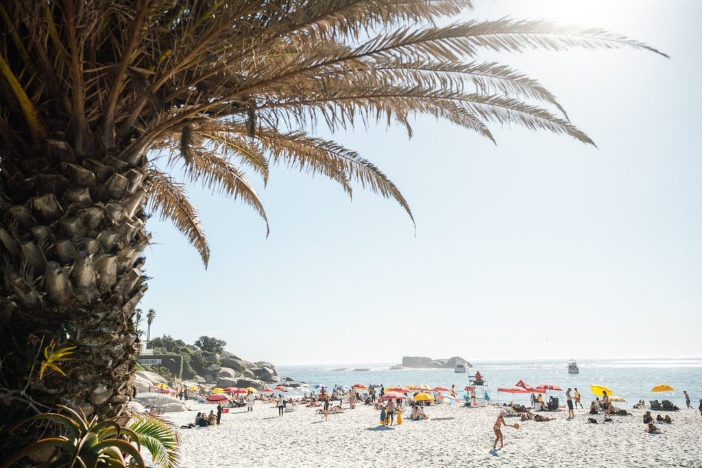 Palm tree and people sunbathing at Clifton fourth beach in Cape Town in summer