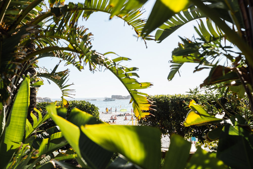 Lots of green plants and leaves opening to Clifton Beach in Cape Town
